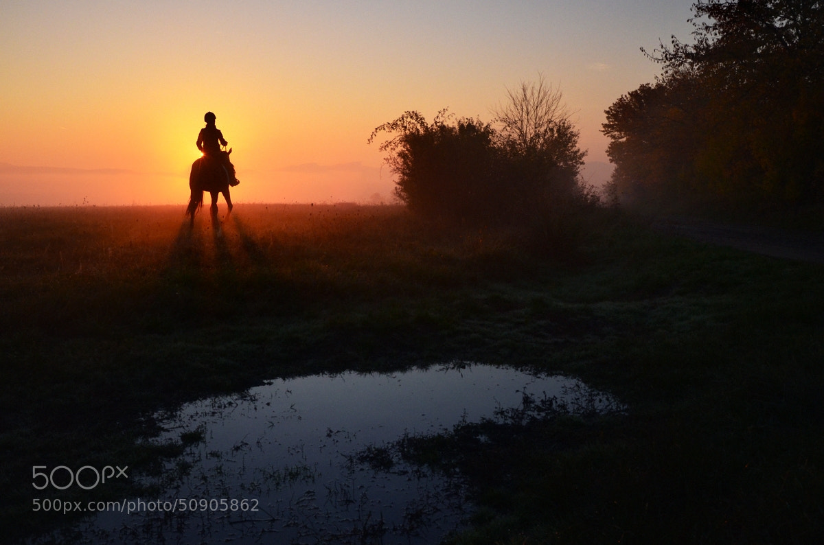 Photograph Shadow of Horse by Peter Kováč on 500px