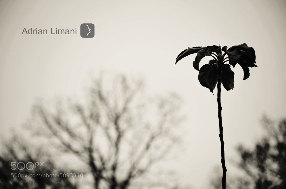 Photograph B&W Tree by Adrian Limani on 500px