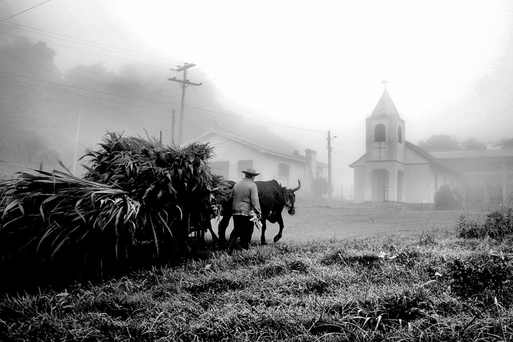 Photograph Rural Life by Alberto Nogueira Junior on 500px