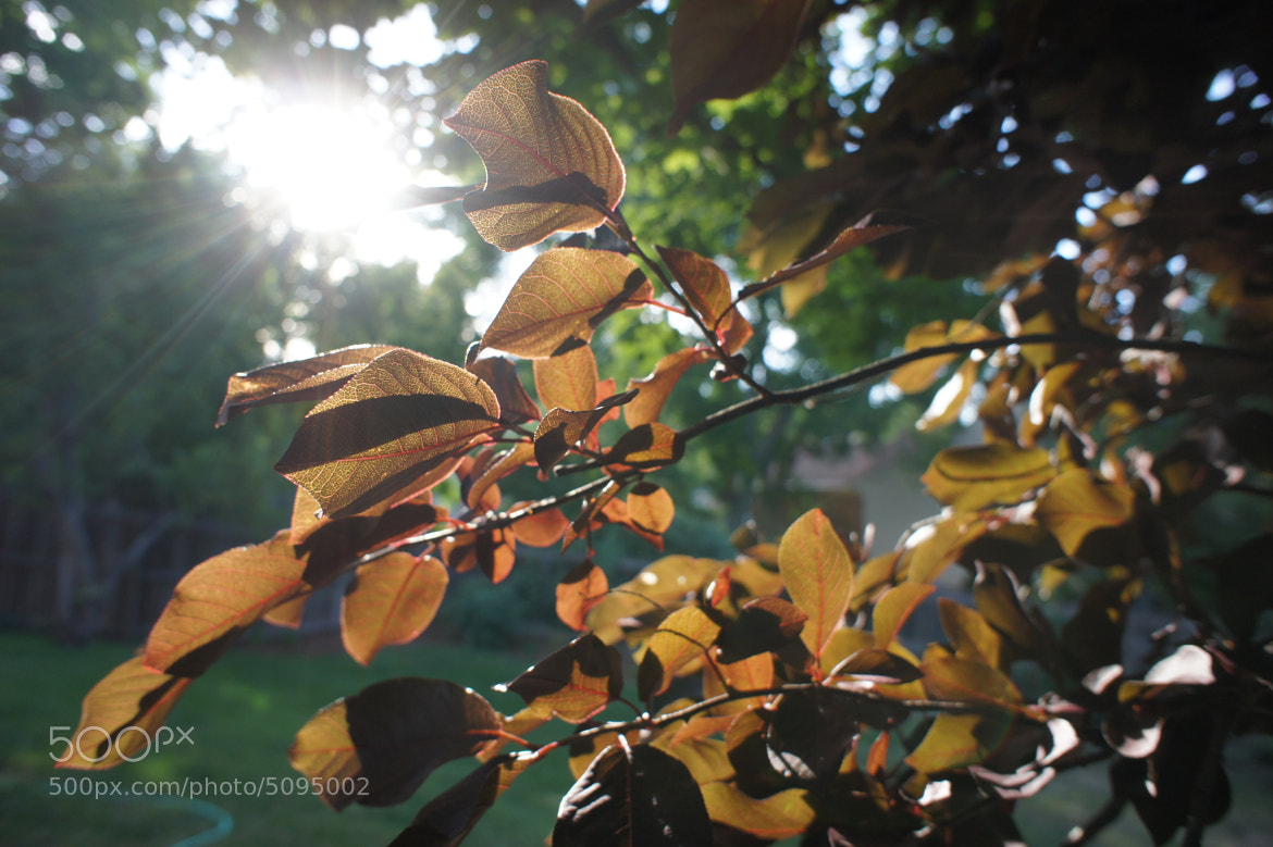 Photograph Those Brown Leaves by Matt Bowers on 500px