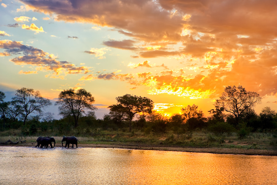 Photograph Kruger Magic by Mario Moreno on 500px