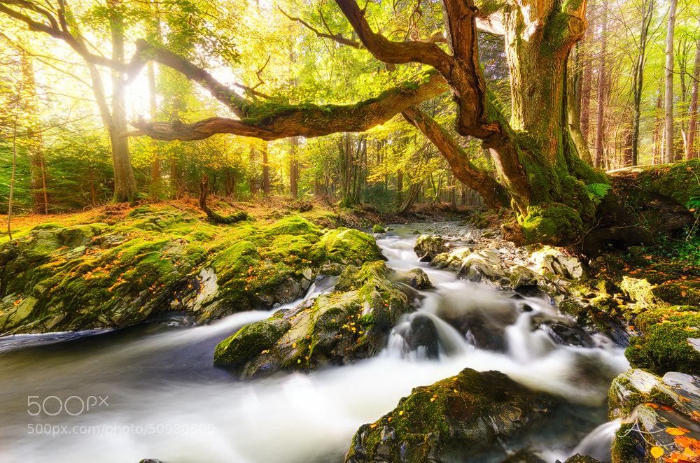 Photograph Enchanted by Alan Owens on 500px