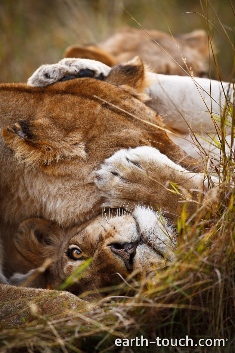 Photograph Nuzzling Muzzles by Earth Touch on 500px