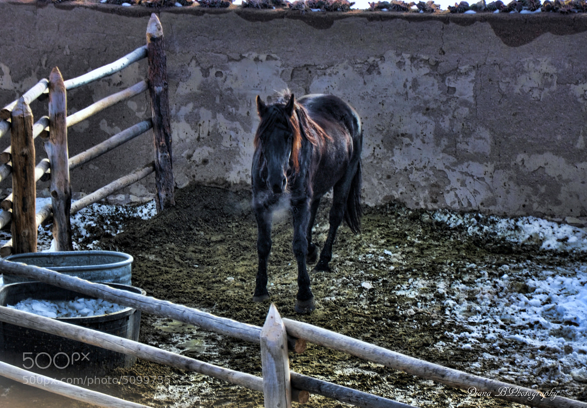 Photograph Prancing mare in the cold by Diana BPhotography on 500px