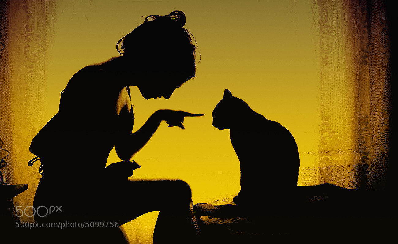 Photograph Bad kitty by Sandy Manase on 500px