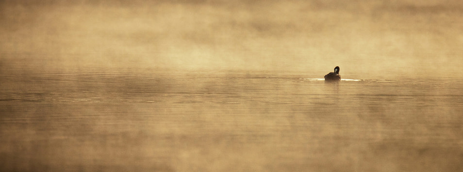 Photograph So lonely by Laurent DUFOUR on 500px
