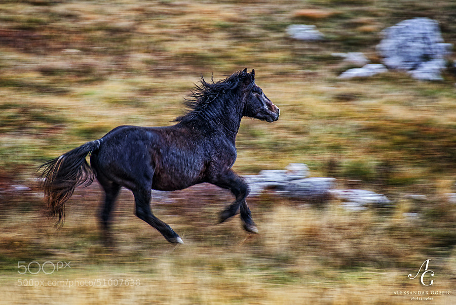 Krug Planina highland below Cincar (2006m) mountain is home to many wild horses where they enjoy endless freedom