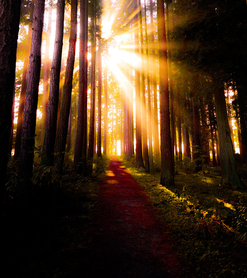 Photograph Fire in the forest by Edward Marcinek on 500px
