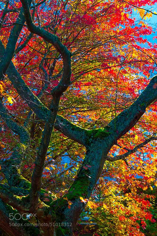 Photograph Fall Colors by Edward Marcinek on 500px