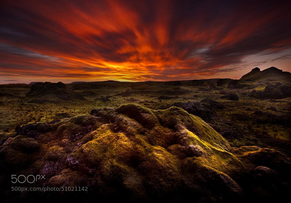 Photograph Moss Morning by samuel FERON on 500px
