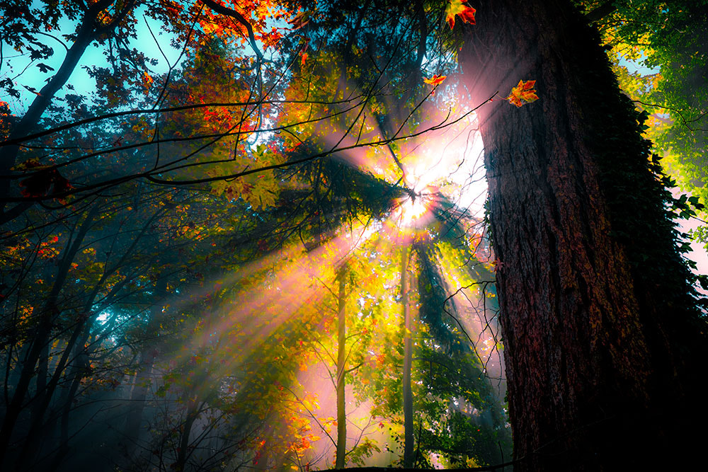 Photograph Sunburst by Edward Marcinek on 500px