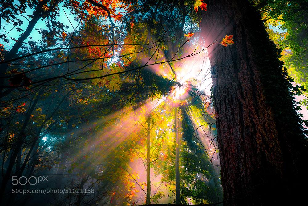 Photograph Sunburst by Edward Marcinek on 500px