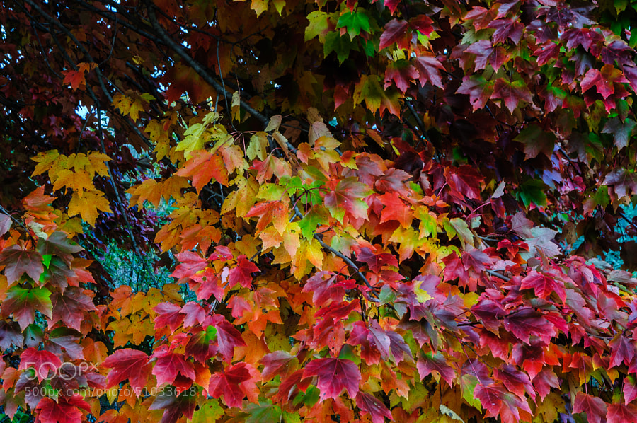 The incredible beauty of the leaves turning colors.  What a display of artistry nature gives to us if we only stop to look at appreciate.