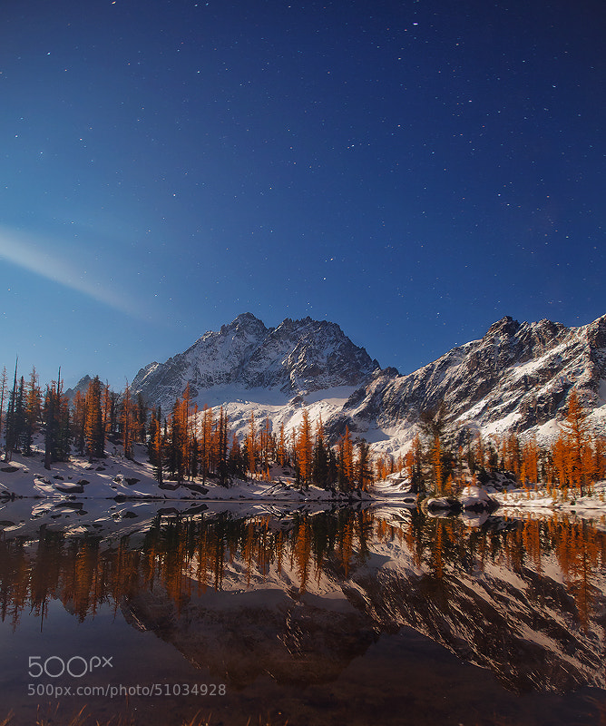 Photograph Chilled in Moonlight by Trevor Anderson on 500px