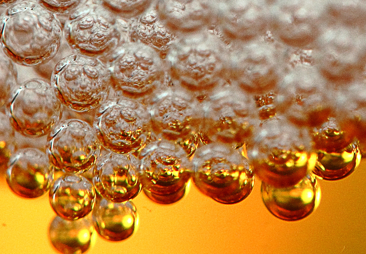 Photograph Beer bubbles by Pavel Koshkin on 500px