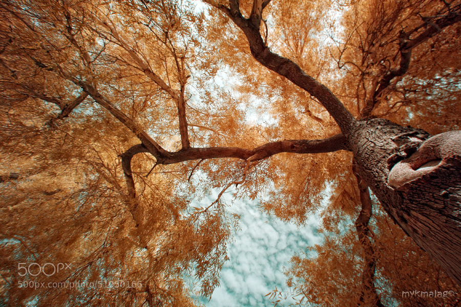 Photograph branch out by Michael Malag on 500px