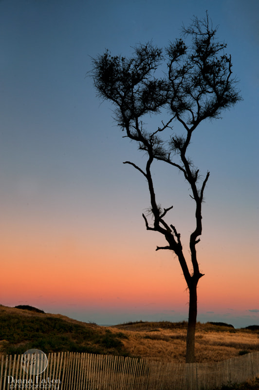 Tree at Fort Fisher, NC at sunset