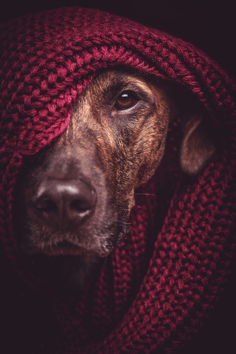Photograph They call him the quiet rambler by Elke Vogelsang on 500px