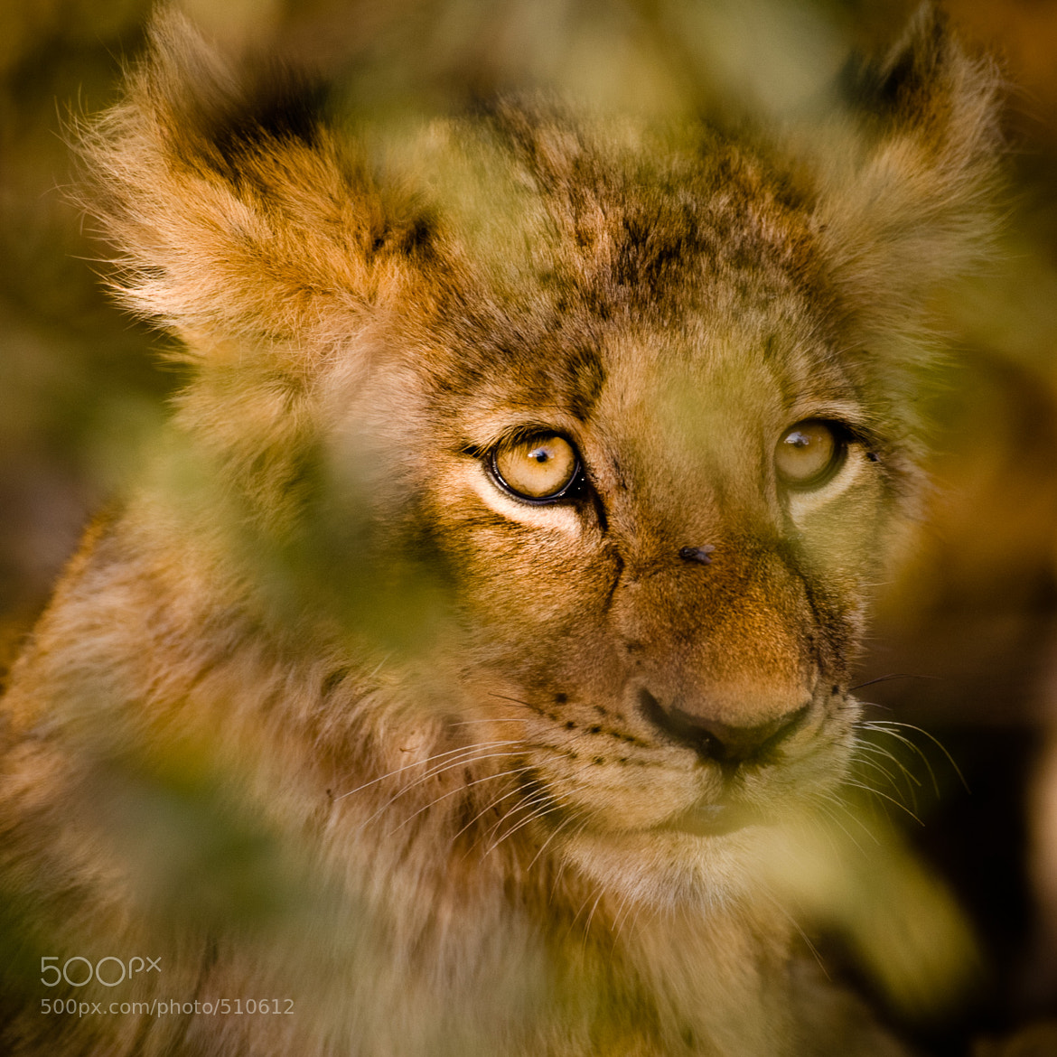 Photograph Fear of the predator by Gorazd Golob on 500px