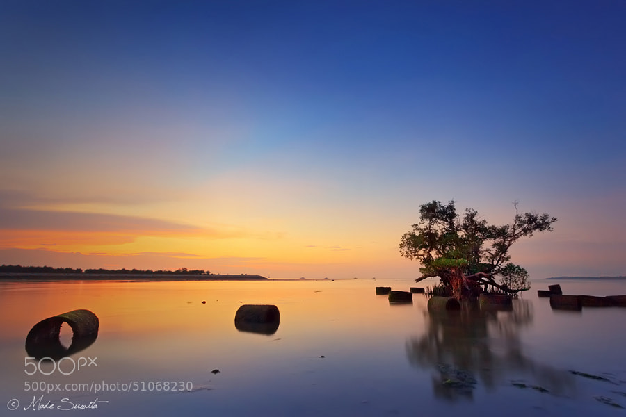 Photograph The Last Mangrove by Made Suwita on 500px