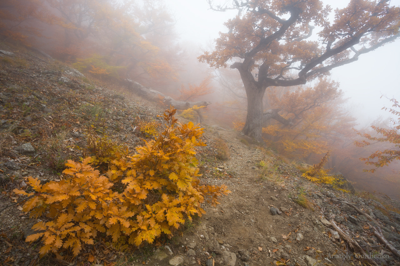 Photograph Demerdzhi's foggy paths... by Anatoly Gordienko on 500px