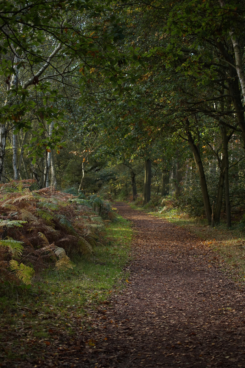Photograph Forest Trail 1 by Robin Jones on 500px