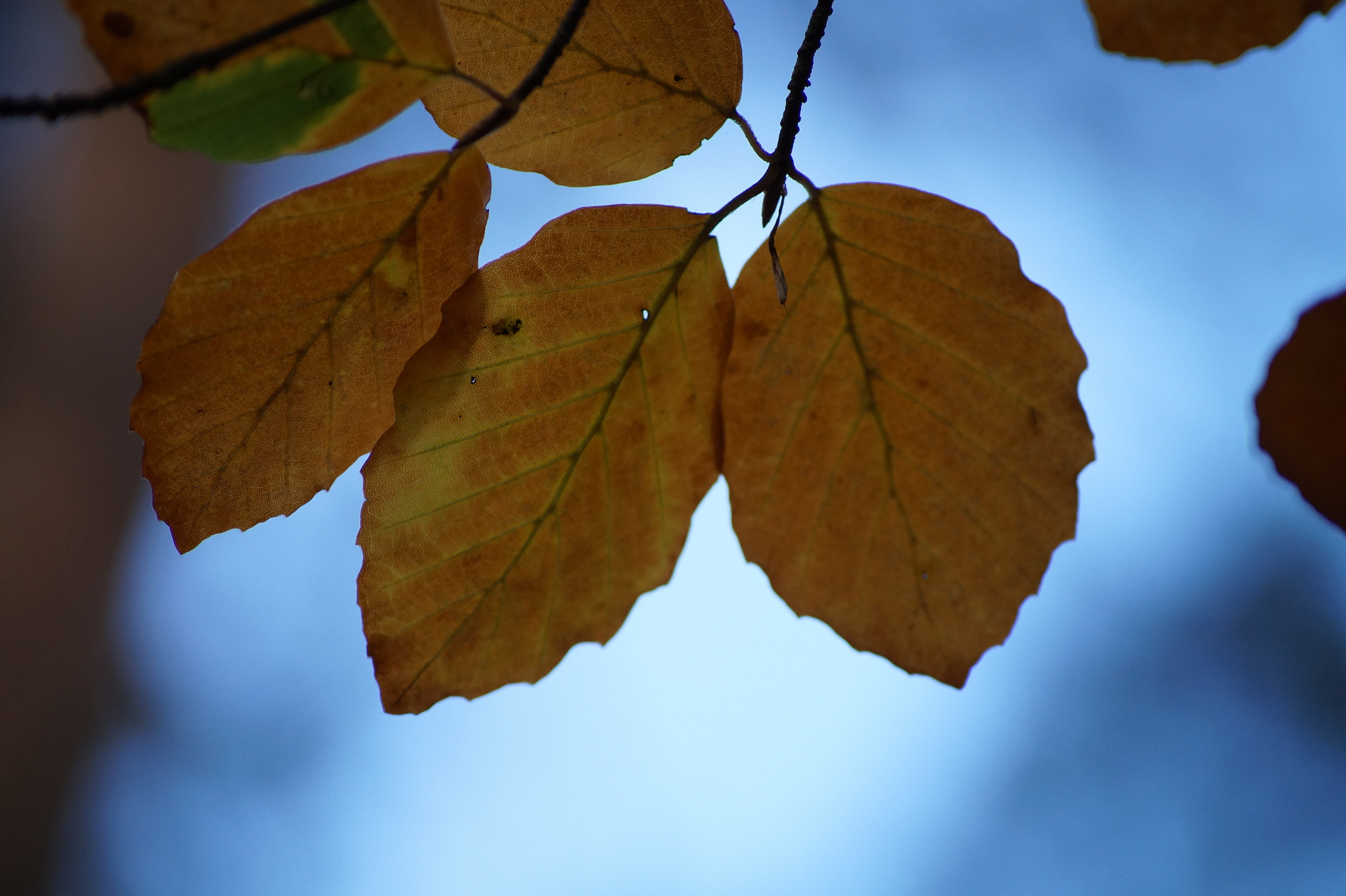 Photograph Autumn Leaves by Robin Jones on 500px