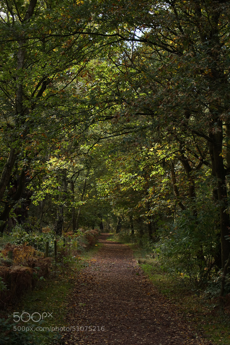 Photograph Woodland Trail by Robin Jones on 500px
