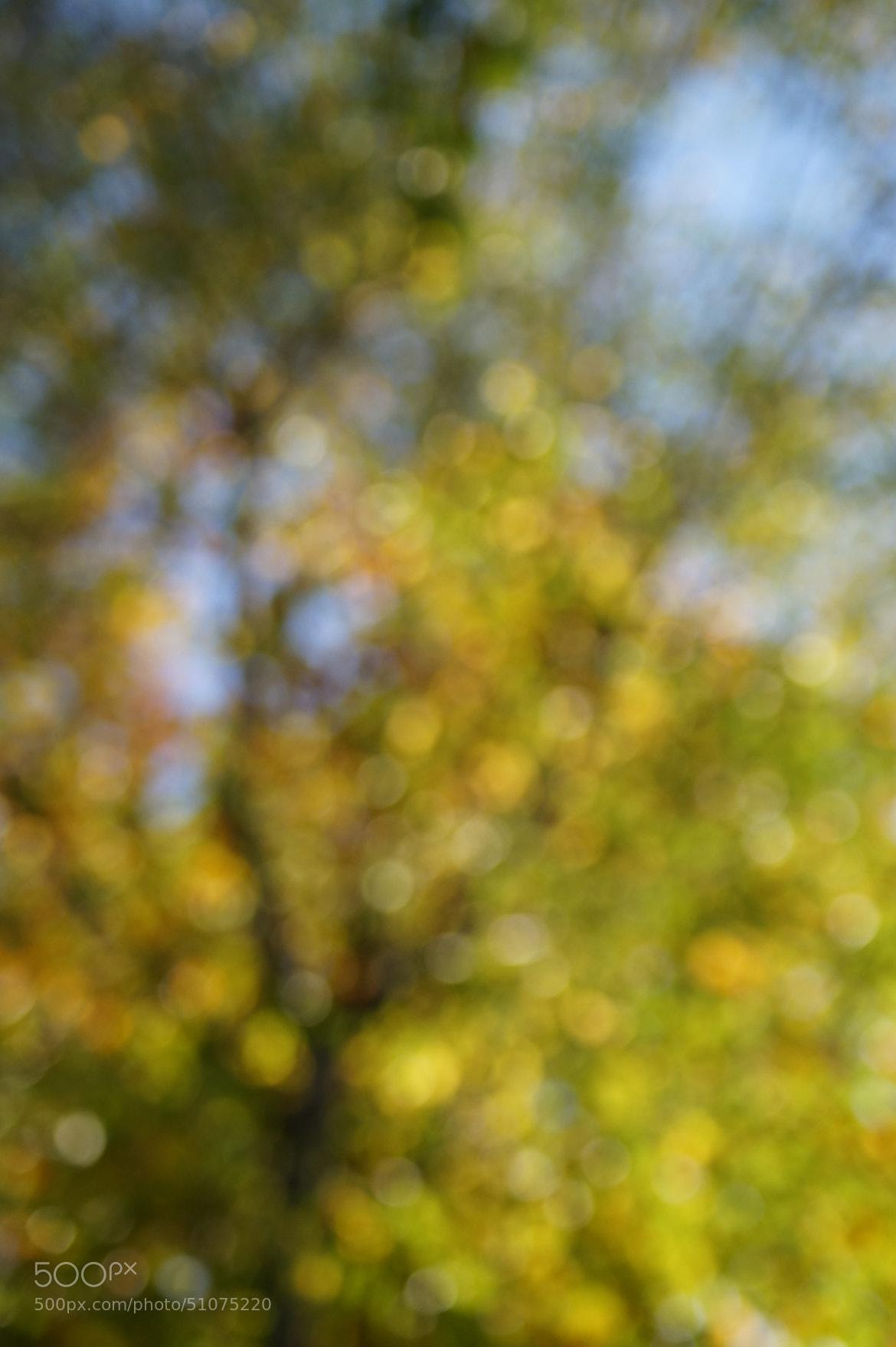 Photograph Autumnal Bokeh by Robin Jones on 500px