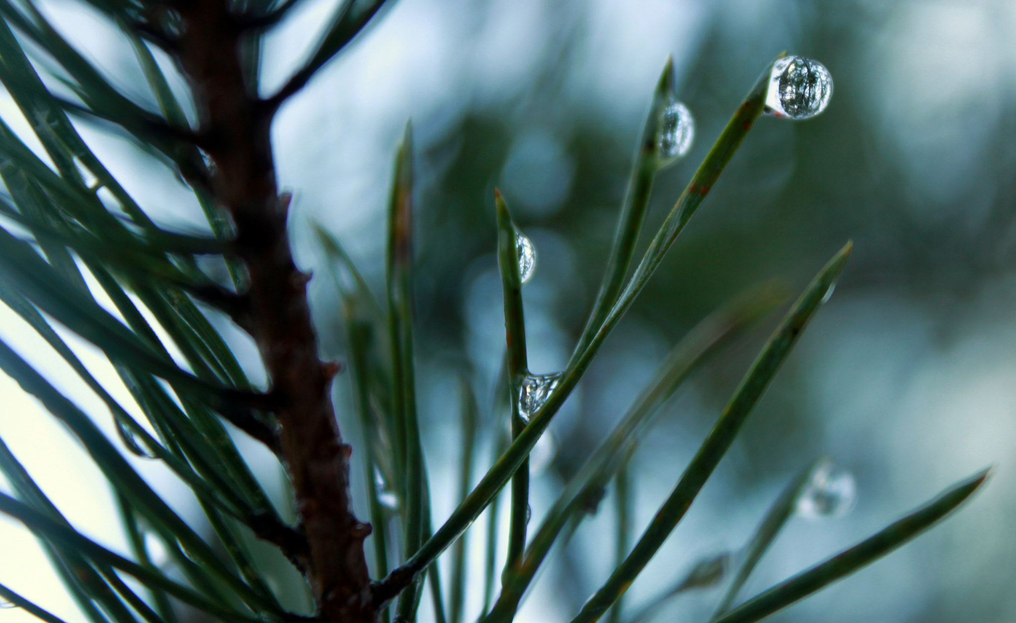 Photograph Water Drops by Marte Gerhardsen on 500px