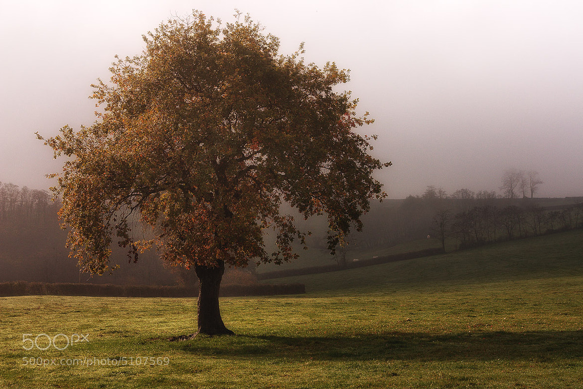 Photograph November by Etienne HYDRAY on 500px