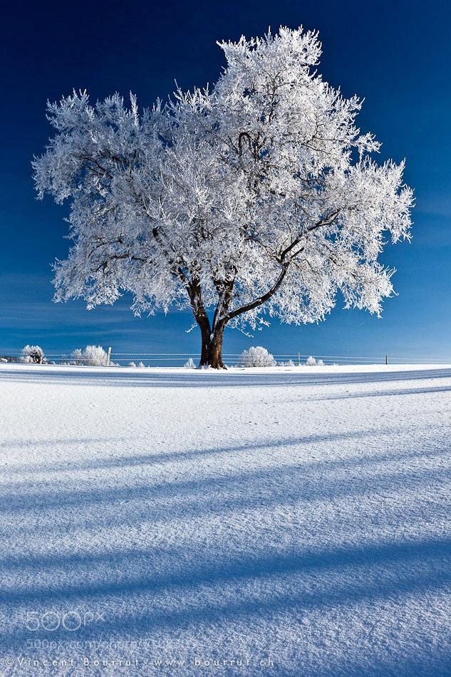 Photograph The frozen king by Vincent BOURRUT on 500px