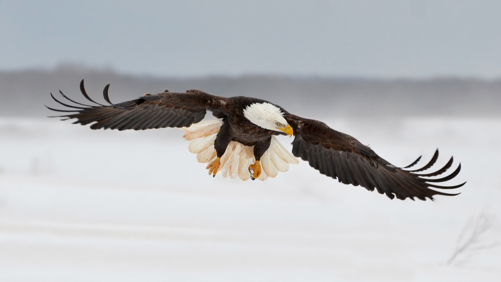 Photograph Winter's Warrior by Peter Brannon on 500px