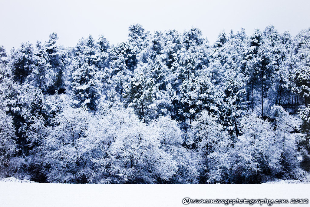 Photograph Snow In The Forest by Marc Garrido on 500px