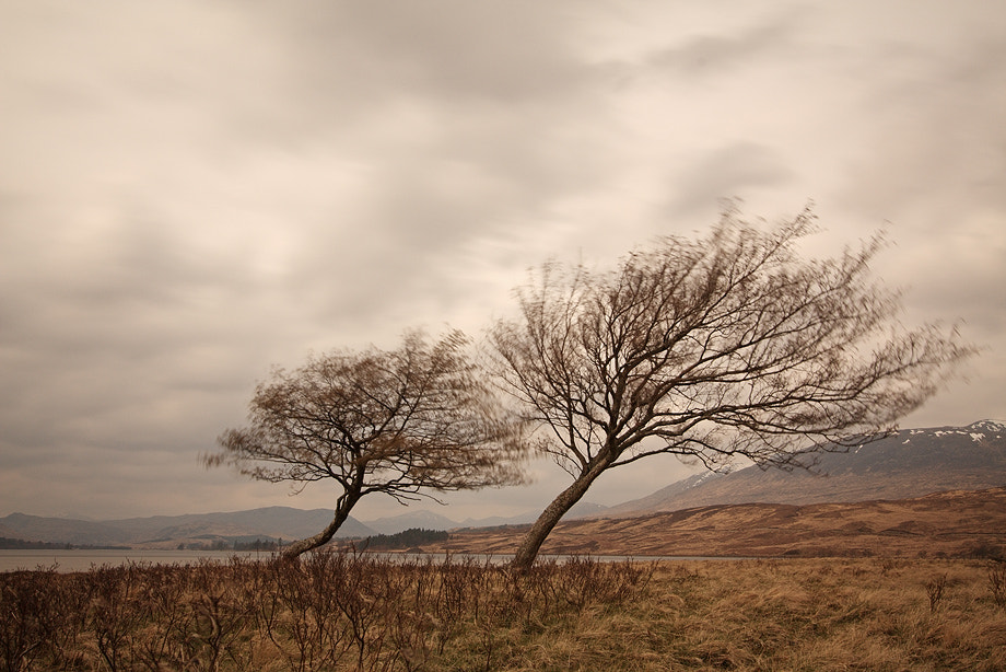 Photograph Lonely Trees in the Wind by Claudio Coppari on 500px