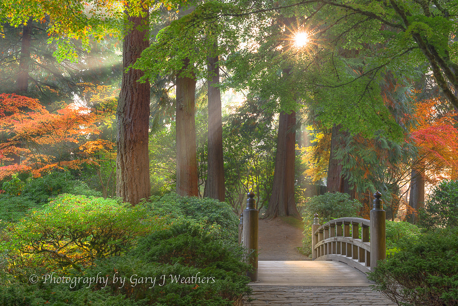 Photograph Golden Rays, Portland Japanese Garden. by Gary Weathers on 500px