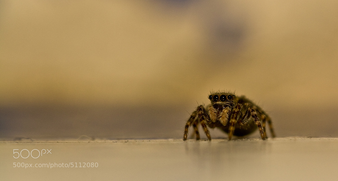 Photograph Jumping Spider by Mike Upshon on 500px