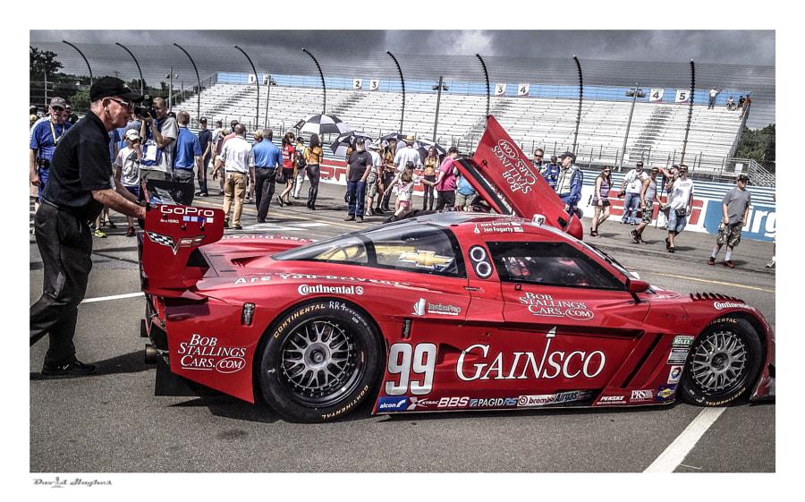 Gainsco 2013 Corvette DP