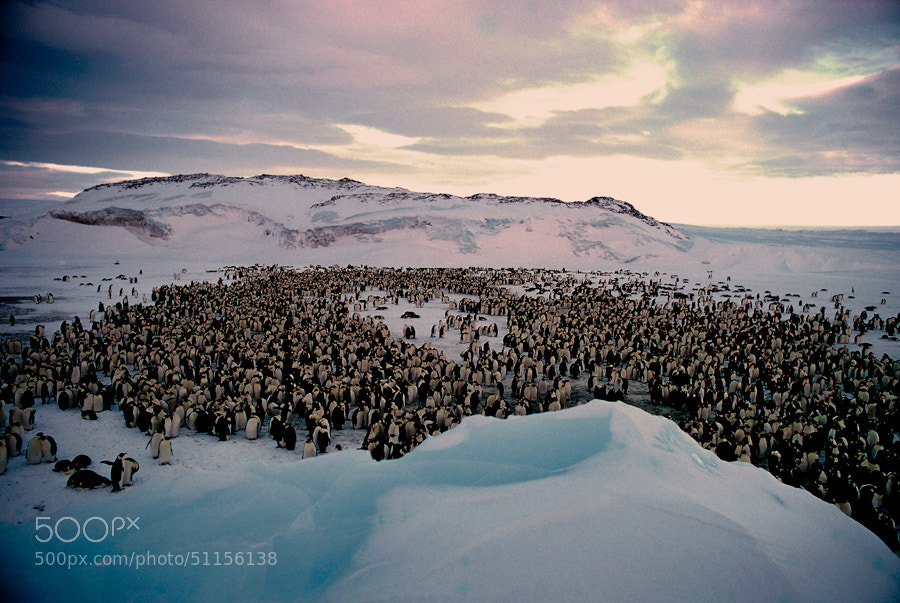 Photograph Emperor penguins by Jean-Claude  on 500px