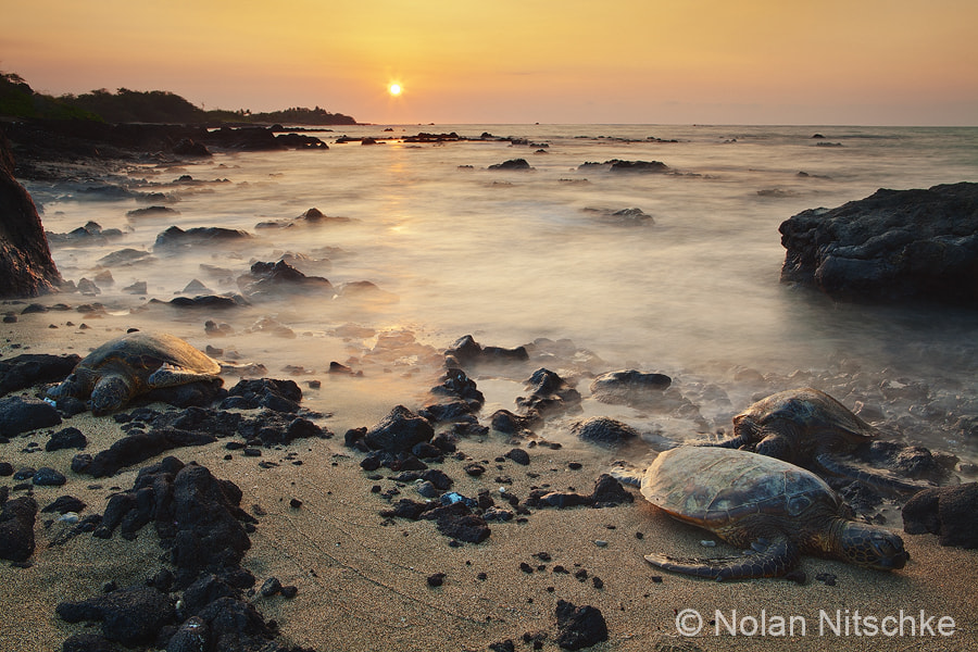 Photograph Sea Turtle Sunset by Nolan Nitschke on 500px