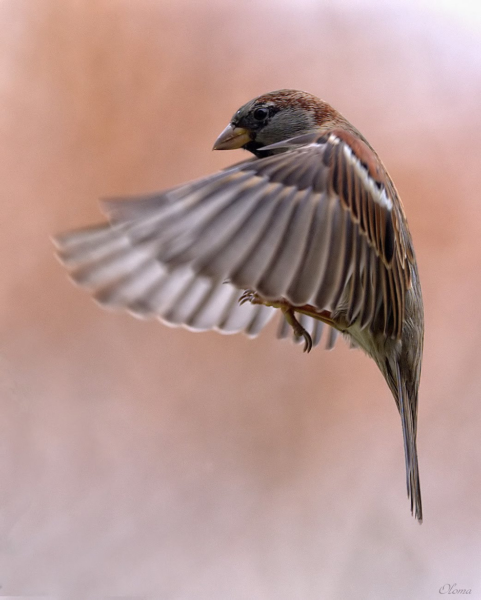 Photograph Bird by Didier Cauvain on 500px