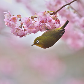 Spring has come by Kaz Watanabe (paparl58) on 500px.com