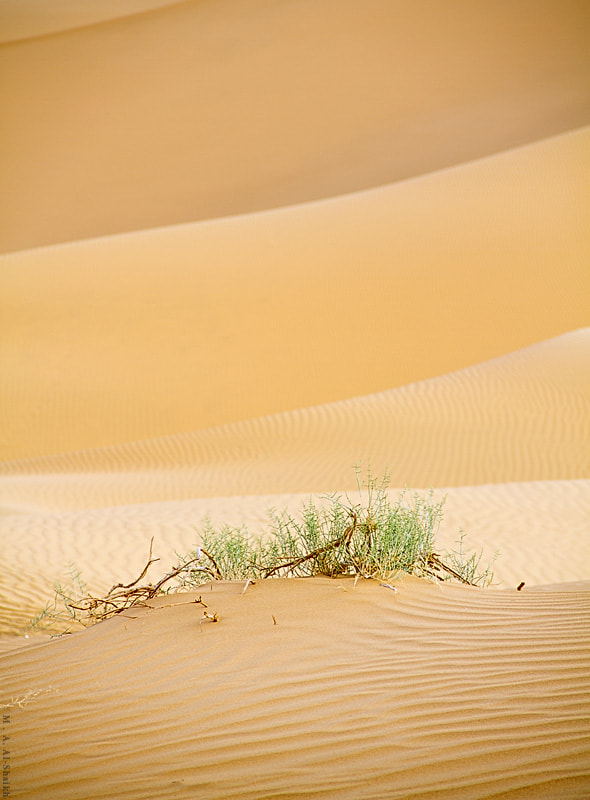 Photograph Desert lines by Mohammad Al-Shaikh on 500px