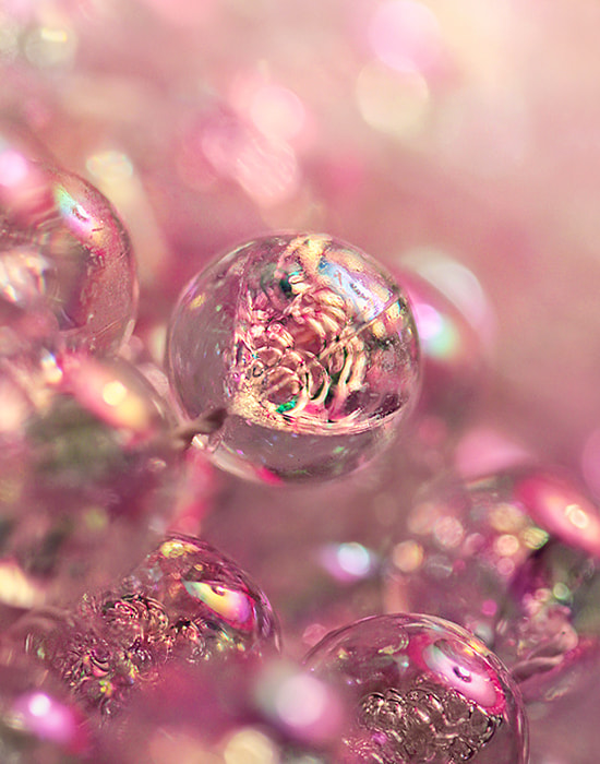 Photograph raspberry bubbly by Beauty   on 500px