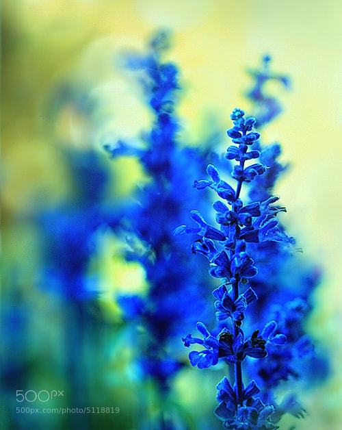 Photograph impressionism by nature by Beauty  on 500px