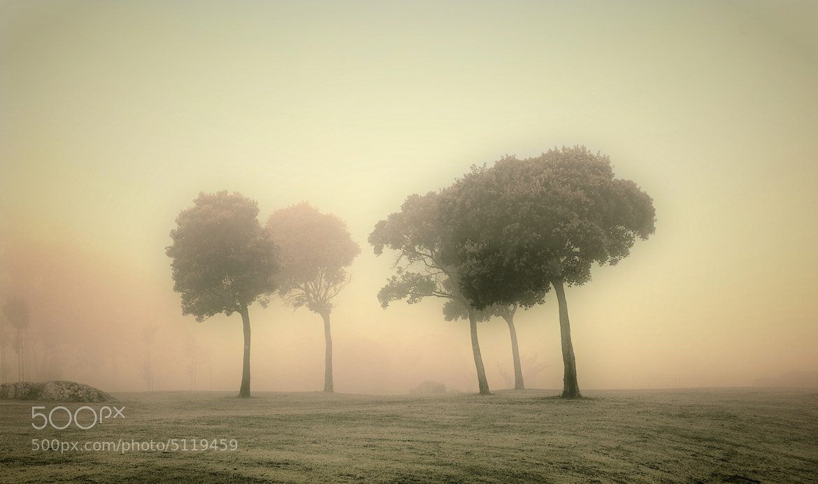 Photograph la niebla by Luis Martínez on 500px