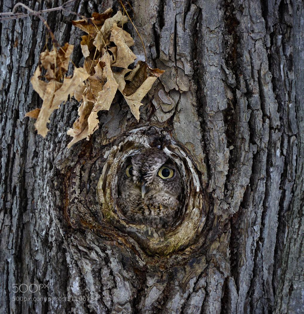 Photograph Owl by Marianna Armata on 500px