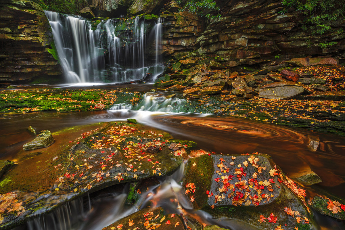 Photograph Falling Leaves by Wick Smith on 500px