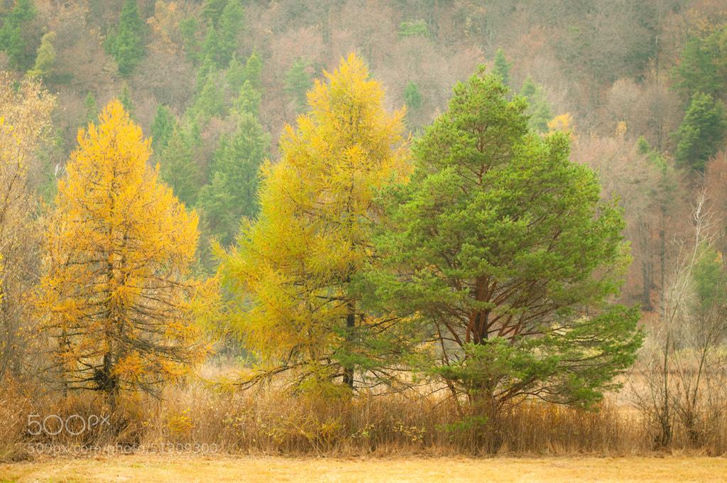 Photograph Autumn by Umberto Salvagnin on 500px
