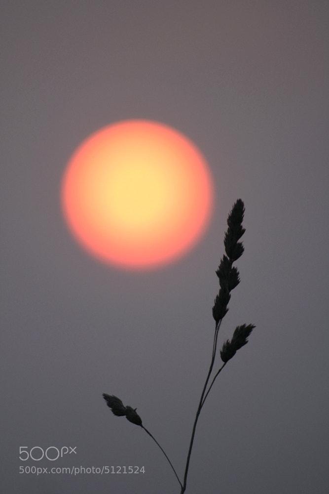 Photograph the sun by Dara Pilyugina on 500px